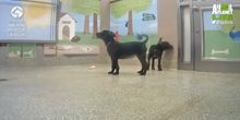 Animal Planet Live: cachorros - Webcam, Washington