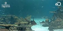Tiburones de arrecife - Webcam, Baltimore